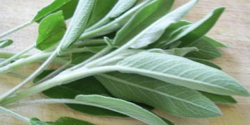 Sage Herb - Salvia officinalis