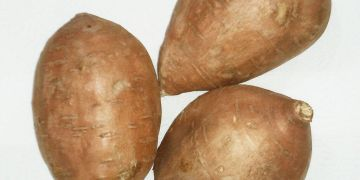 Sweet Potato - Ipomoea batatas
