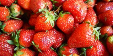 Strawberries - Fragaria × ananassa